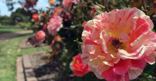 Community Briefing rose slide
